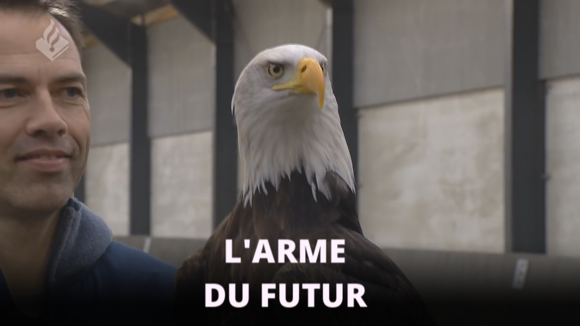 Les Pays-Bas dressent des aigles...