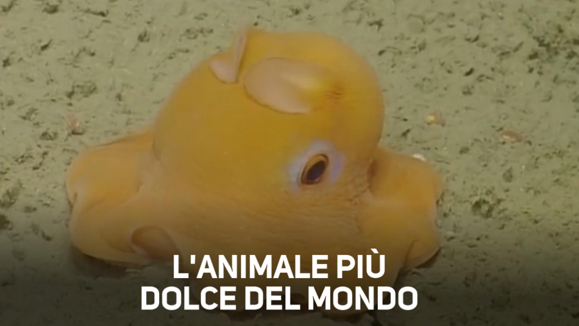 Il cucciolo pie' tenero del mondo e' un octopus