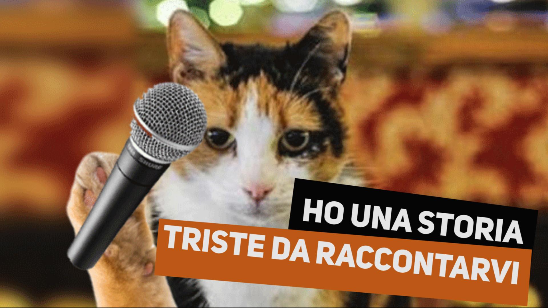 Caccia ai gatti: in Olanda non li vogliono pie'??
