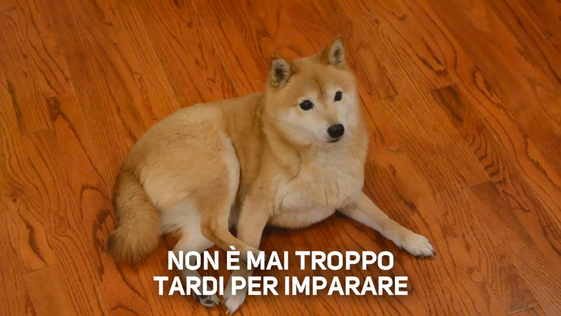 Il cane che non riesce a fare le capriole