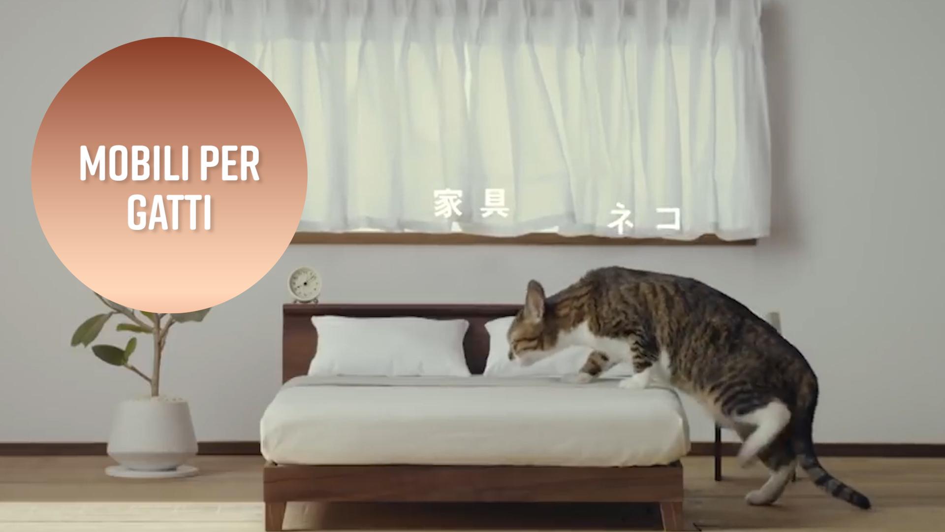 Arredamento su misura... per felini!